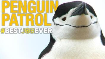 Tagging Adorable, Nasty Little Penguins
