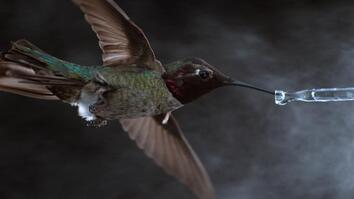See Hummingbirds Fly, Shake, Drink in Amazing Slow Motion