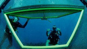 Fish Farms of the Future?