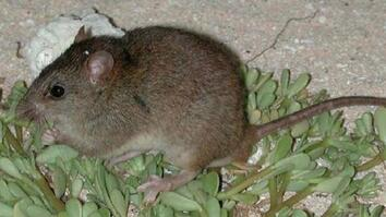 First Mammal Extinction By Climate Change