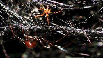 World's Weirdest: Deadly Mating