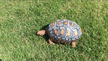 Scientists 3-D Printed a Tortoise Shell