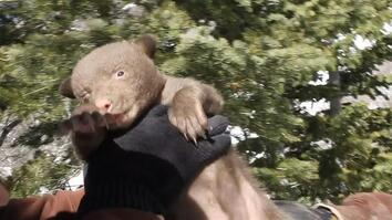 Utah Bears End Hibernation Early. That Could Be a Problem.