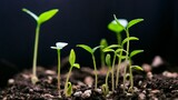 How Dirt Can Help Slow Climate Change