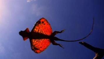 World's Weirdest: Flying Dragon