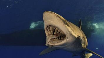 Close Encounters with a Dangerous Shark