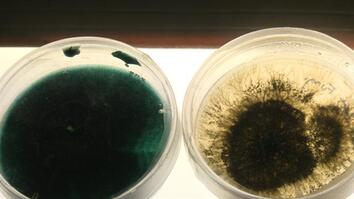 Oil-Eating Bacteria Could Be a Solution to Spill Cleanups