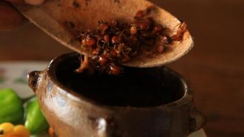 Hot Sauce Made With Ants—Would You Eat It?
