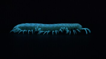 Watch These Millipedes Glow in the Dark