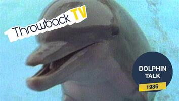 Throwback TV: Dolphin Talk