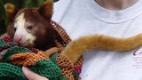 Tree Kangaroo Conservation Program