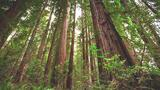 Experience the Magic of Redwood National Park