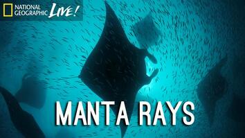Photographing our Seas: Manta Rays