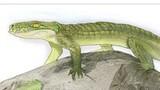 Prehistoric Croc Was Mammal-like