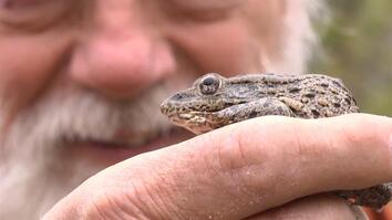 Frog-Licking and Other Florida Wonders