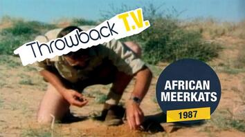 Throwback TV: African Meerkats
