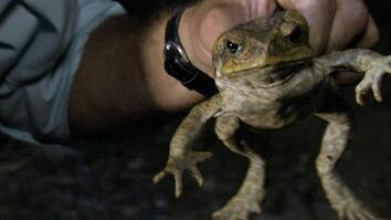 Cane Toad Devastation