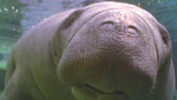 Boat Alarm Could Save Manatees