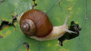 Snail Hits Predator with Its Shell