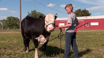 Client Tale: Tanner and his 4-H calf