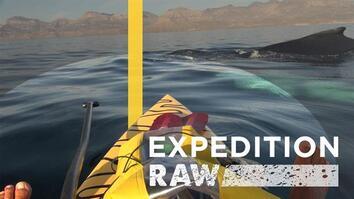 Whales Surprise Baja Paddlers