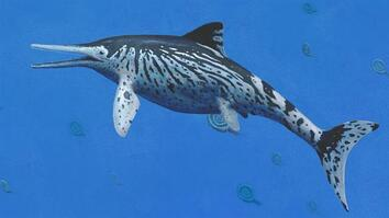 Biggest 'Sea Monster' Fossil of Its Kind Discovered in Museum