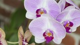 "Replacing Florida's ""Stolen"" Orchids"