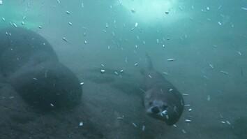 Animals Gone Wild: Otter on the Run