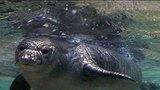 Deep Sea Seal Diver