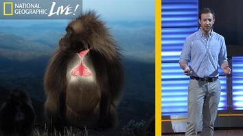 The Fascinating Lives of Bleeding Heart Monkeys (Part 1)