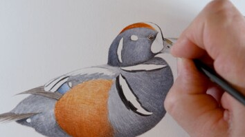 Watch a National Geographic Illustrator at Work