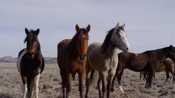 Wild Horse Resolution