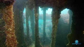 See Life Thriving Inside a Century-Old Shipwreck