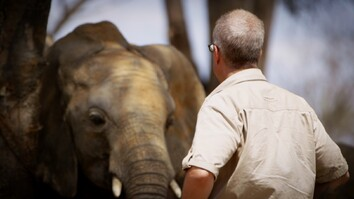 How I Got Arrested Working to Save Elephants
