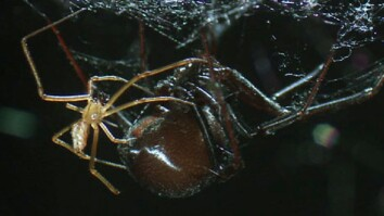 Black Widow: Most Venomous Spider in North America