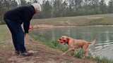 Teaching Dogs to Save Lives