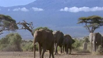 Destination: Eastern Africa