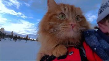 Watch: Skiing With Adorable Adventure Cat Jesperpus