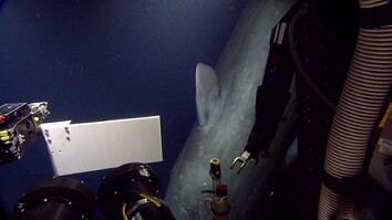 Sperm Whale Surprises Scientists