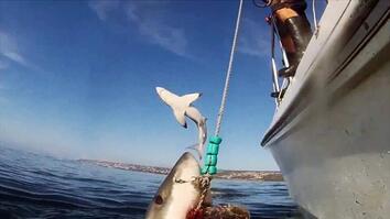 Animals Gone Wild: Shark Showstopper