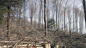 Sustainable Logging