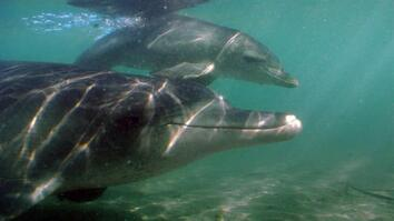 Destination Wild: A Baby Dolphin is Born