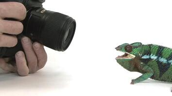Watch: Photographing 12,000 Animals Is Hard Work