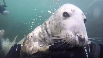 Watch a Seal Get Up Close and Personal With Diver