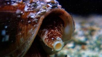 World's Weirdest: Killer Cone Snail