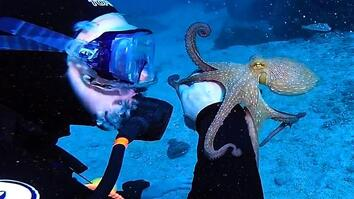 Cute Octopus Latches Onto Diver's Arm