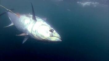 One Plus One Equals Tuna