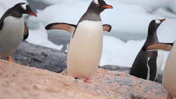 Did You Know We Can See Penguin Poop From Space?
