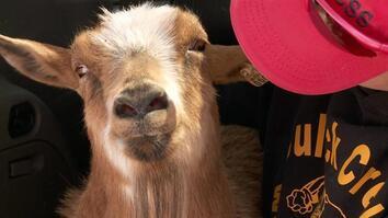 Polio Goat