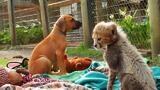 Unlikely Animal Friends: Cheetah Companion